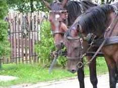 Zugspitz-Region Pferde